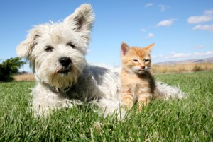 Pet Health Cat and Dog